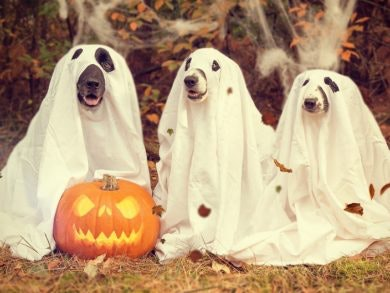 Tipps für schnelle, einfache Halloween-Kostüme aus dem LOOP5 Weiterstadt