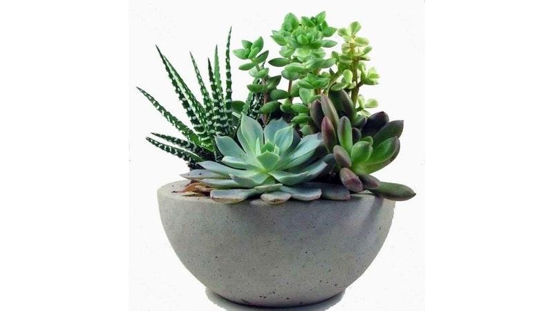 Planta 3 - resized.jpg