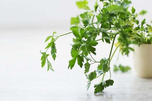 As ervas frescas | Com o mesmo intuito que as especiarias, as ervas frescas são uma excelente forma de adicionar sabor às receitas de uma forma natural. A nutricionista tem vasos de ervas frescas na sua cozinha, de onde retira hortelã, manjericão, cebolinho, coentros, salsa e tomilho na hora, consoante o resultado pretendido.