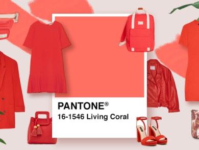 VariosSC_Cordoano-Coral01