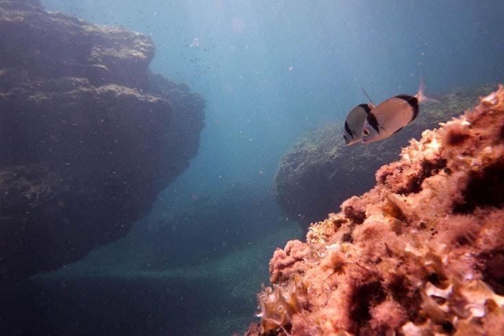 Sitios del Mar Menor para bucear