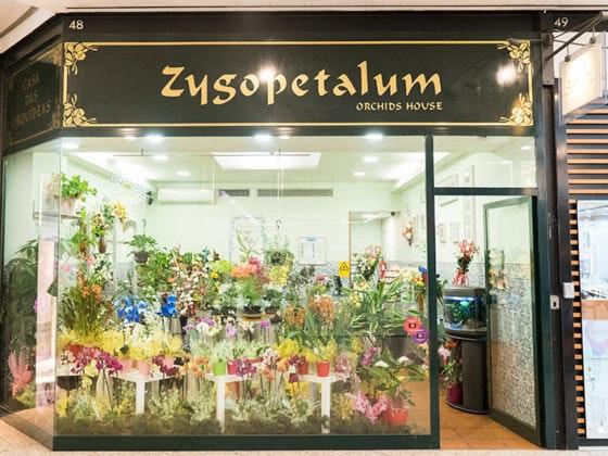 zygopetalum_destaque