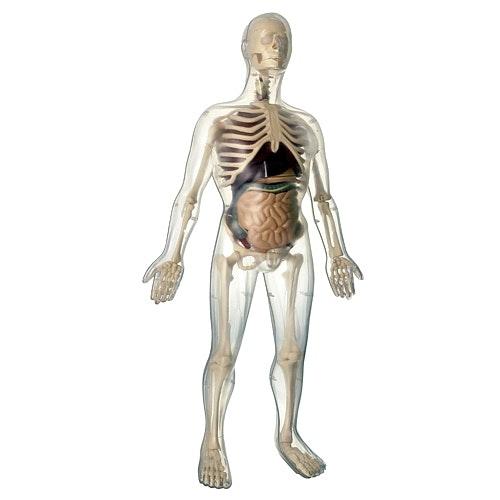Kit Anatomia, 35,95€, Toys'r'Us