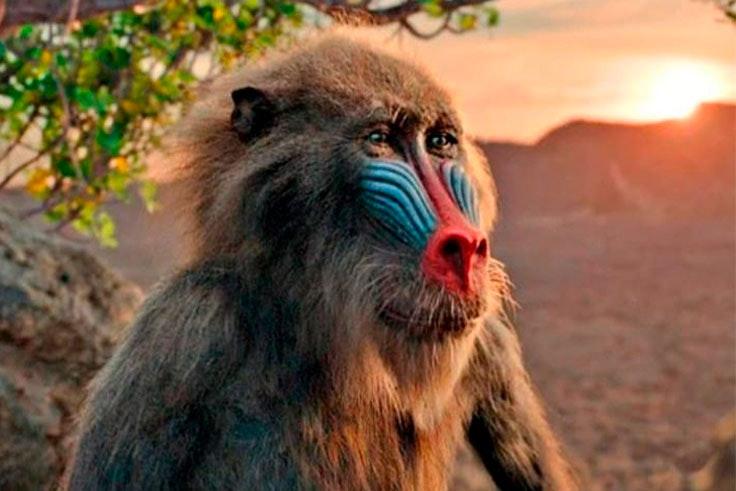 fotos-el-rey-leon