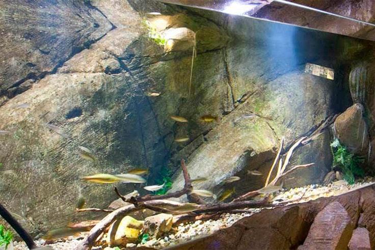 acuario-zaragoza