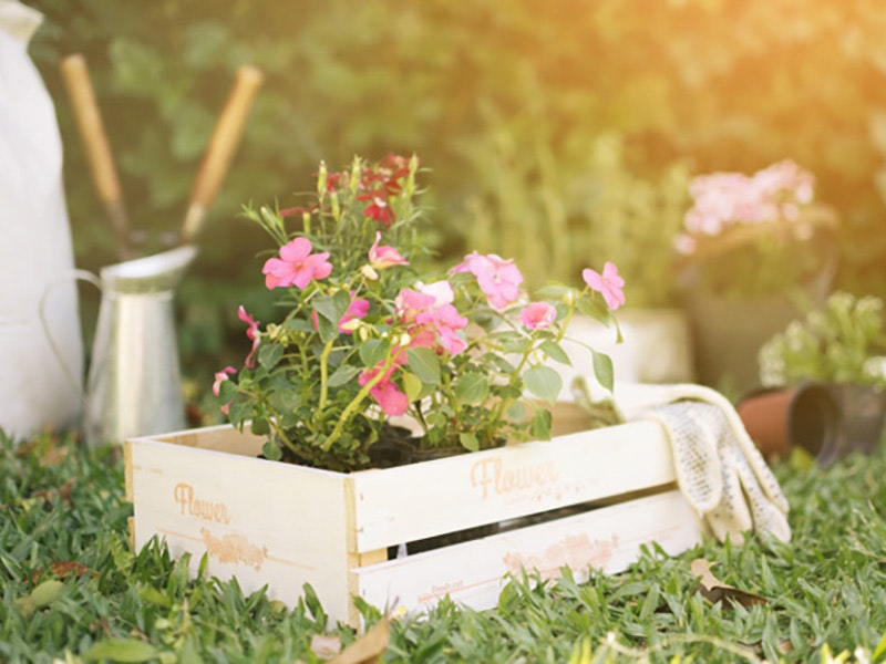 Plantas de otoño para tu jardin