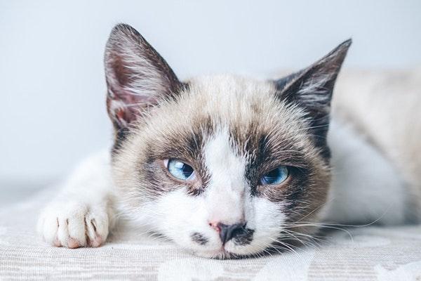 Feliz Día Internacional del gato: curiosidades de los gatos