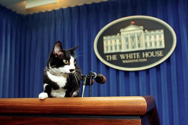 Feliz Día Internacional del gato: gato Socks