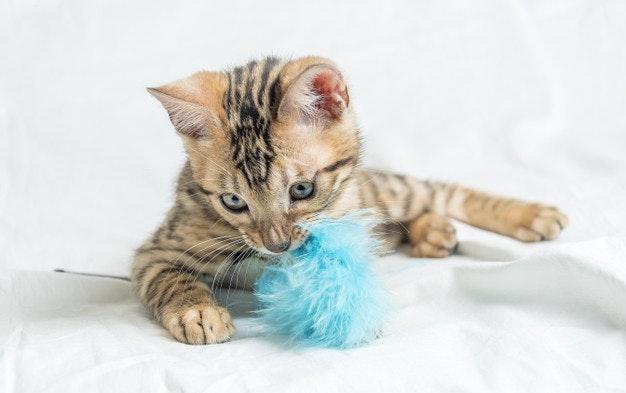 Cómo cuidar de tu gato: juguetes para gatos