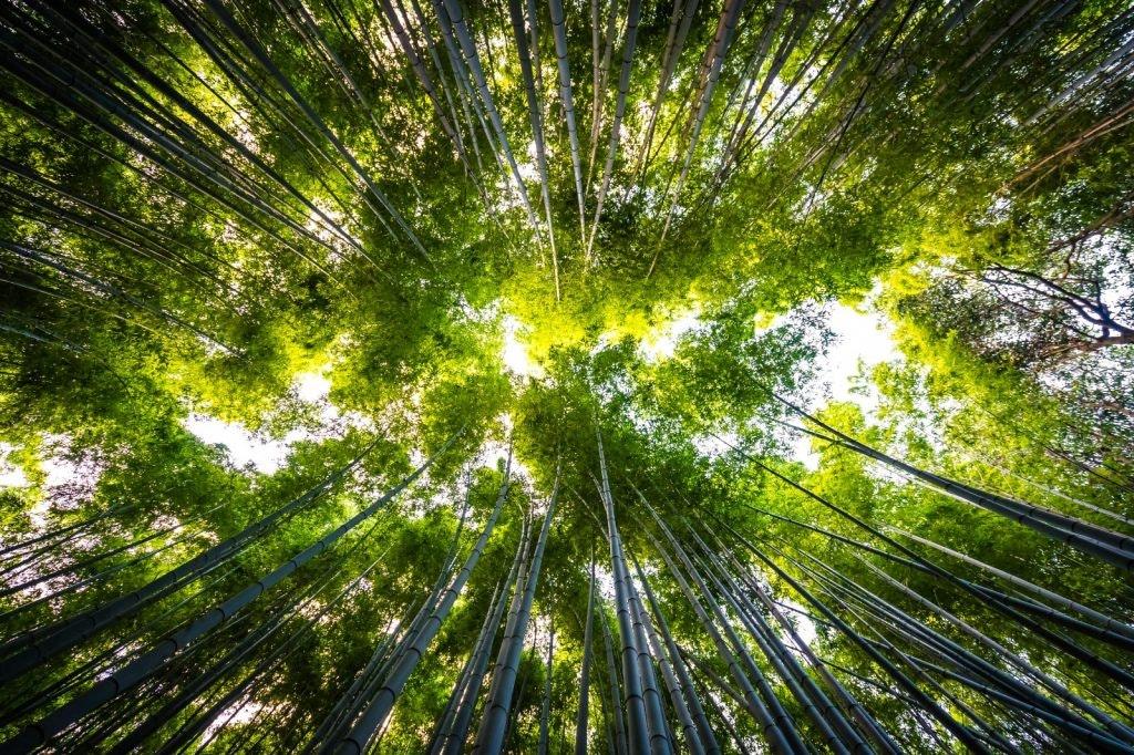 Día Mundial del Medioambiente. Fuente: Freepik