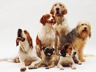 Guau guau! Feliz Día Mundial del Perro