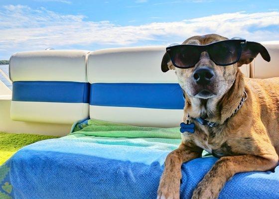 Protege a tu perro frente al calor e insectos