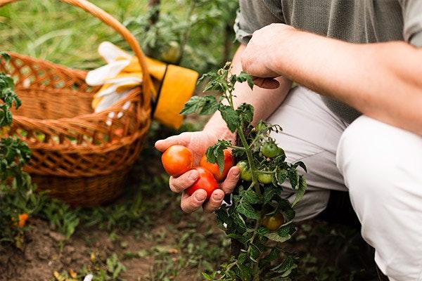 4 ideas para cultivar en septiembre