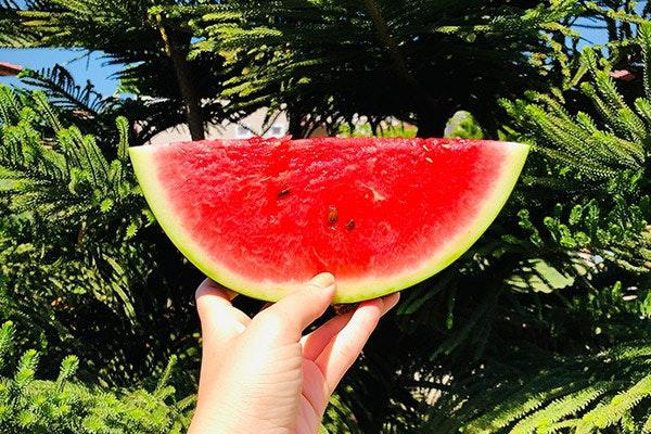 Qué frutas y verduras se comen en agosto