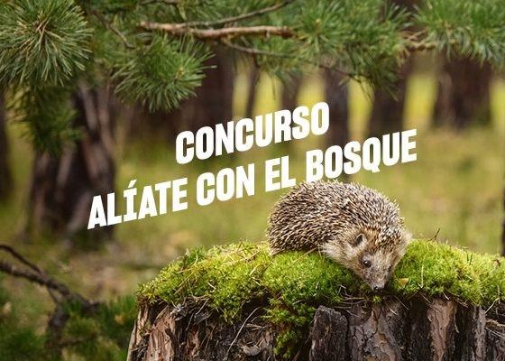 Concurso Alíate con el bosque