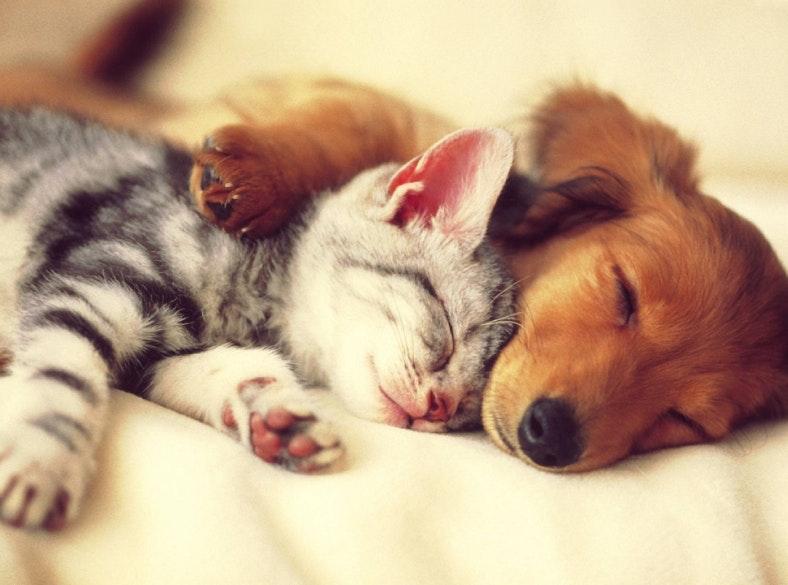 9a51d639979 Gato ou cão  Saiba qual dos animais é mais adequado para si