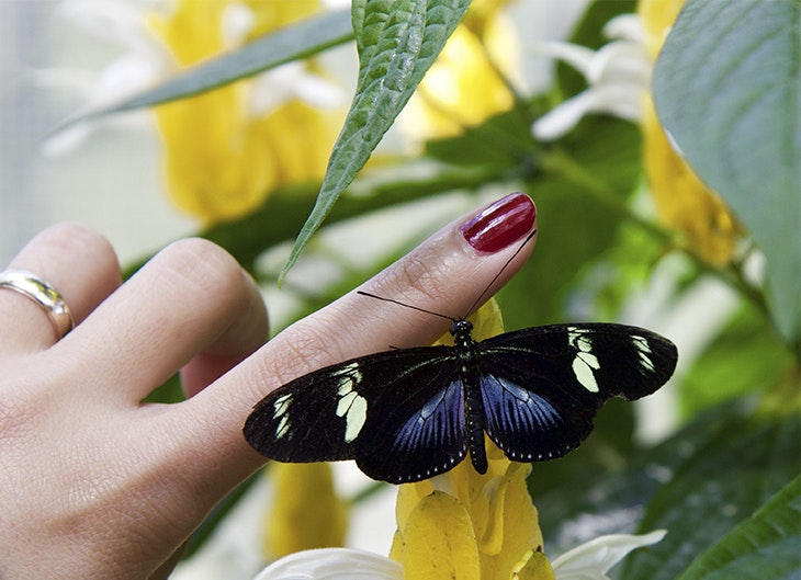 Cómo pintarse las uñas paso a paso