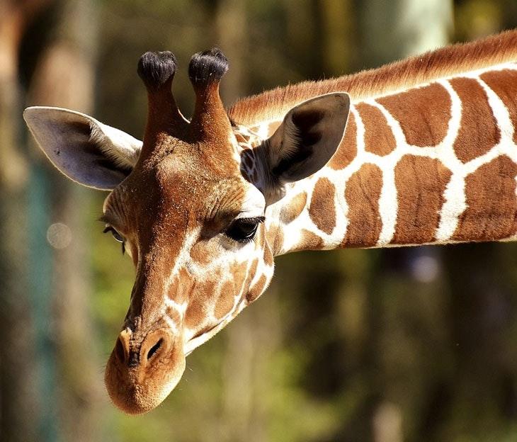 curiosidades de los animales