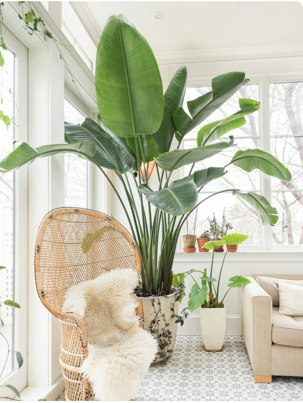 decora tu hogar con un toque tropical de tendencia luz On plantas salon decoracion