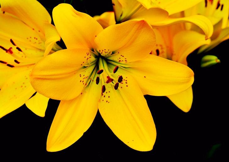 flores primevera