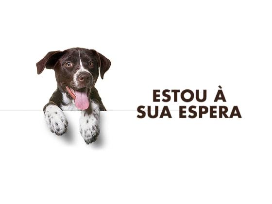 Adoção de Animais no MadeiraShopping