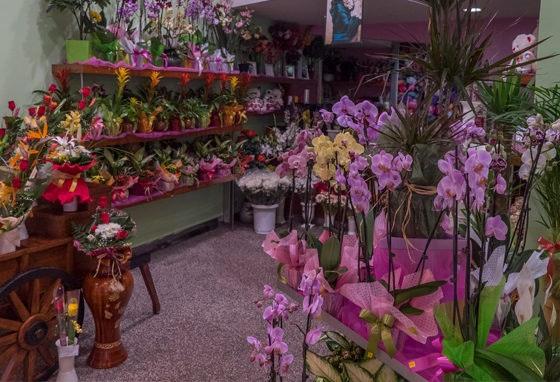 Flor do Campo: onde a primavera já floresceu