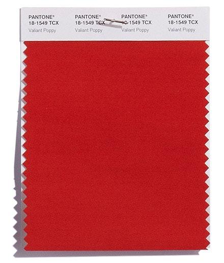 Valiant Poppy   Um vermelho corajoso, extrovertido e efusivo.