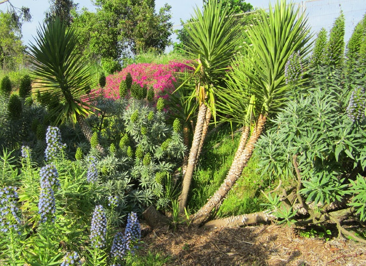 5 curiosidades sobre el jardín botánico Ramón Rubial