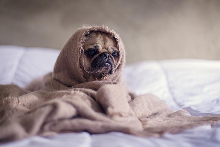 5 razones por las que tener mascotas