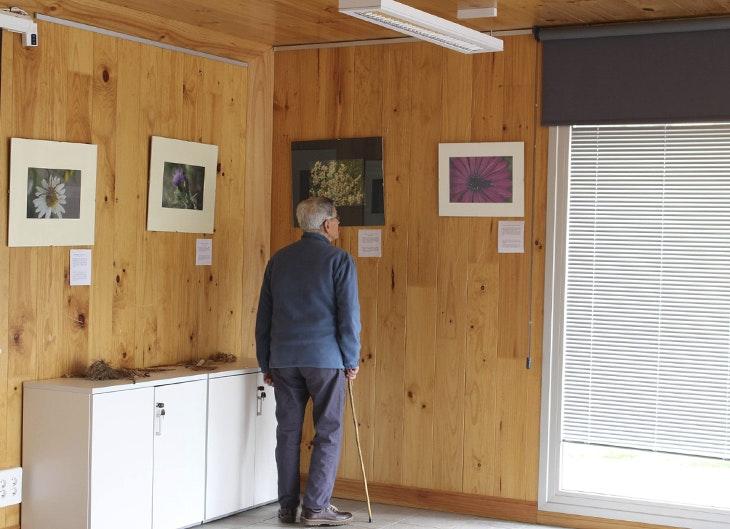 Último mes para visitar la exposición 'Pequeños habitantes del jardín'