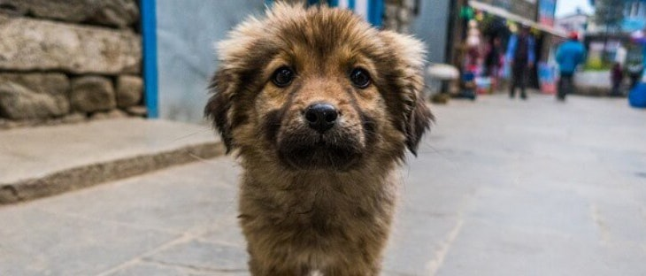 'Barakaldo City Dog': un proyecto pionero y cívico
