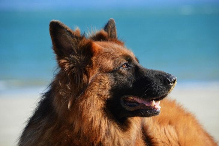 nombres de perro