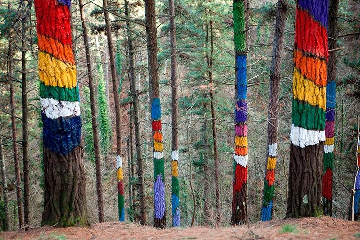 el bosque de oma