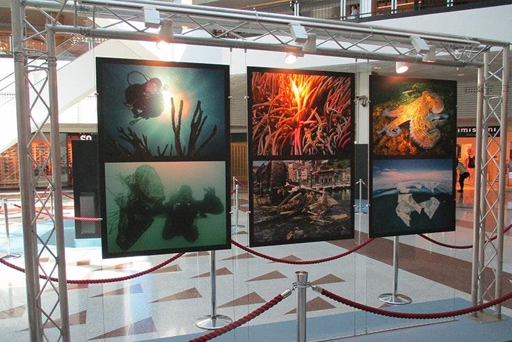 exposicion salvar la vida marina