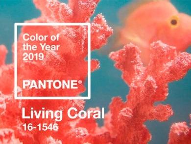 color-pantone