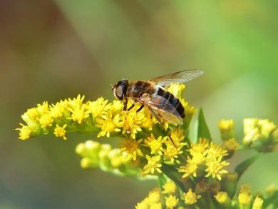 día-mundial-del-medio-ambiente-biodiversidad