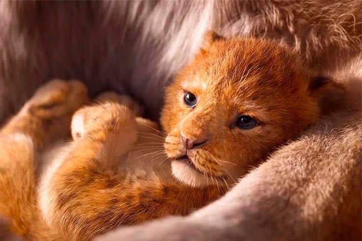 que sabemos de el rey leon