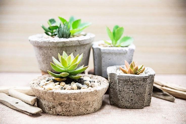 plantas-de-interior-crasas