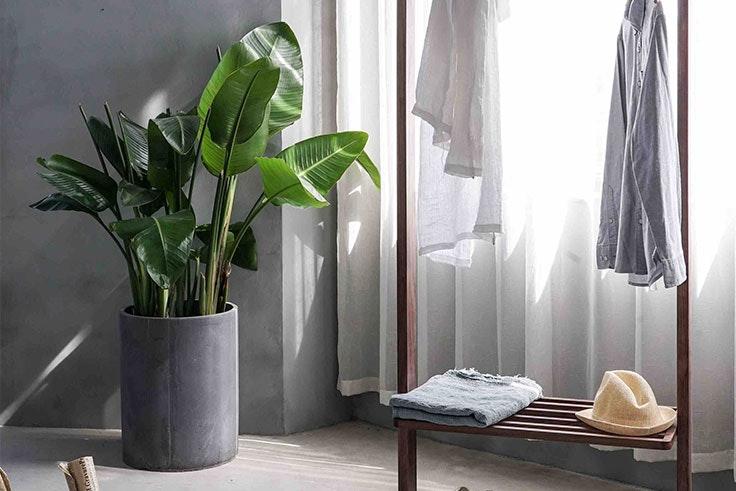 plantas-de-interior-ficus
