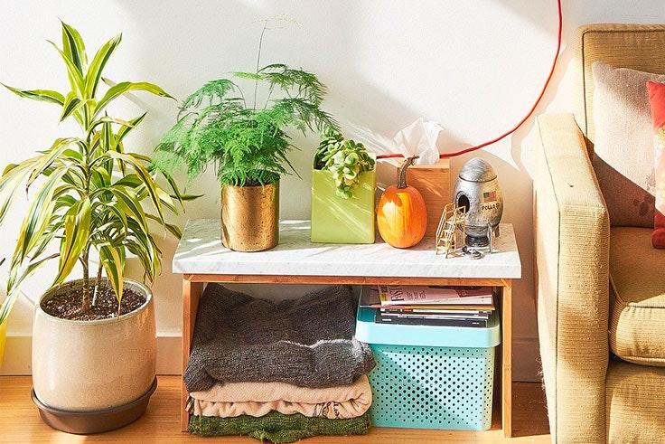 plantas-de-interior-poto
