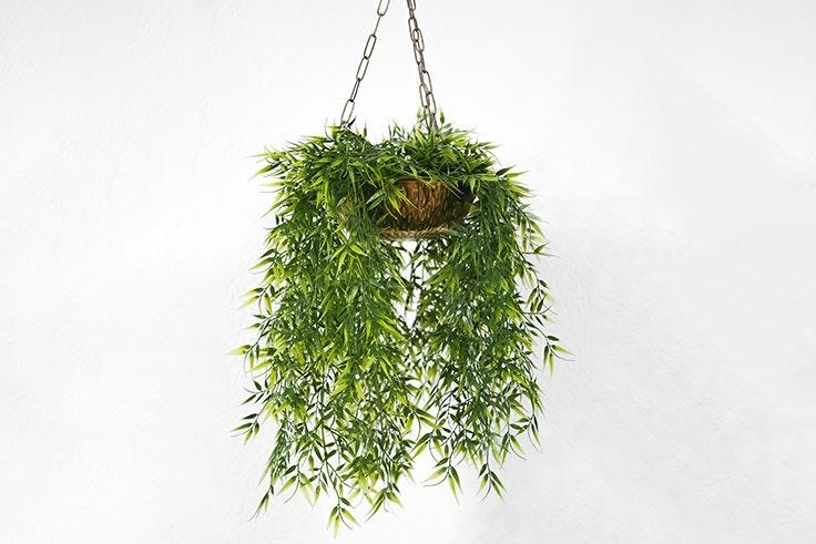 plantas-de-interior-cactus-flo