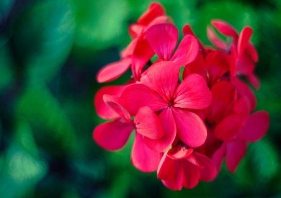 flores primavera hogar