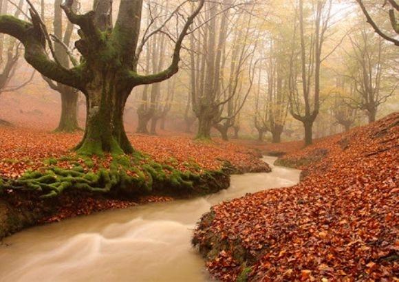 Bosque Mágico Gorbeia