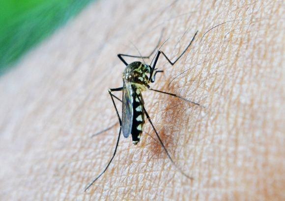 ahuyentar picaduras mosquitos