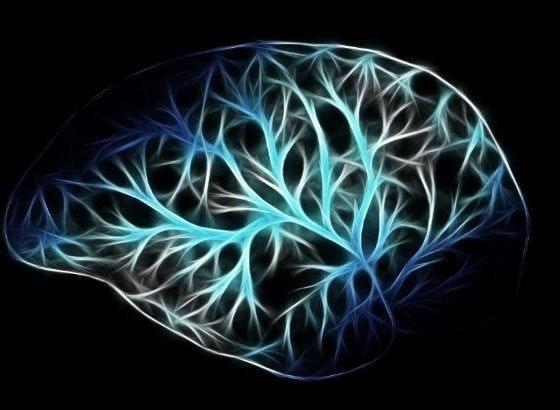 ciclo natural cerebro
