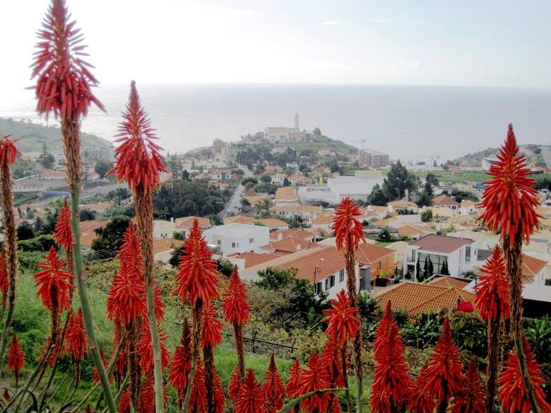 Funchal (241 €)