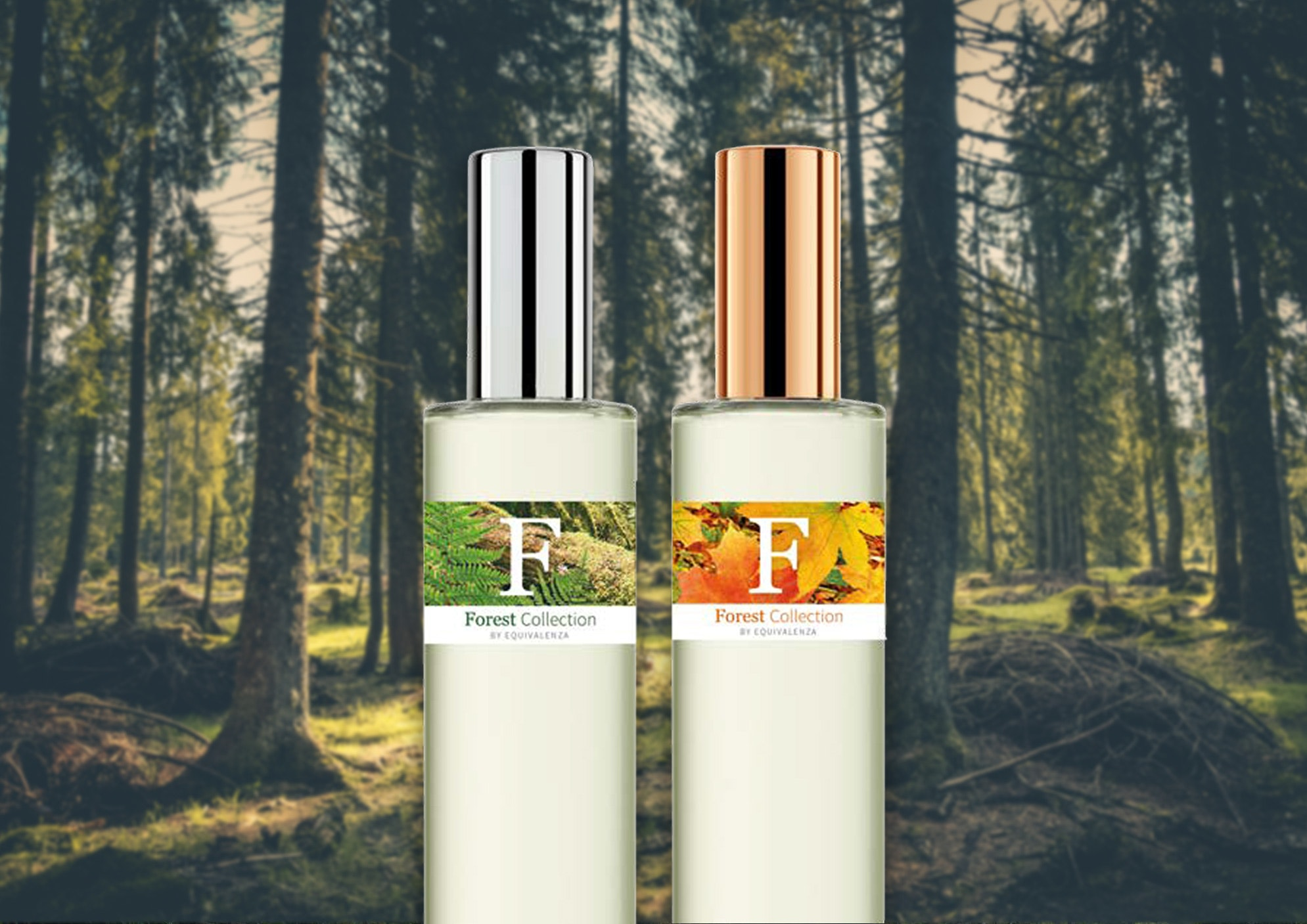 forest_destaque