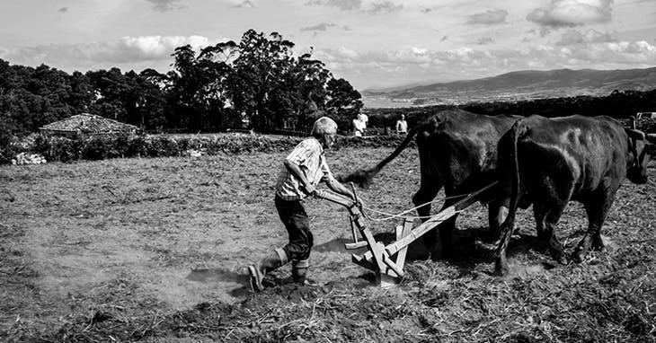 Ilhas e gentes dos Açores em fotografia