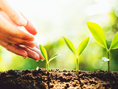 Além de separar o lixo, poupar água e utilizar materiais biodegradáveis, há, pelo menos, mais uma medida que pode adotar: fazer compostagem.