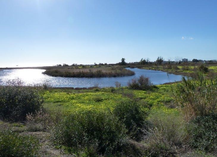 La Desembocadura del Guadalhorce: una ruta de senderismo en familia